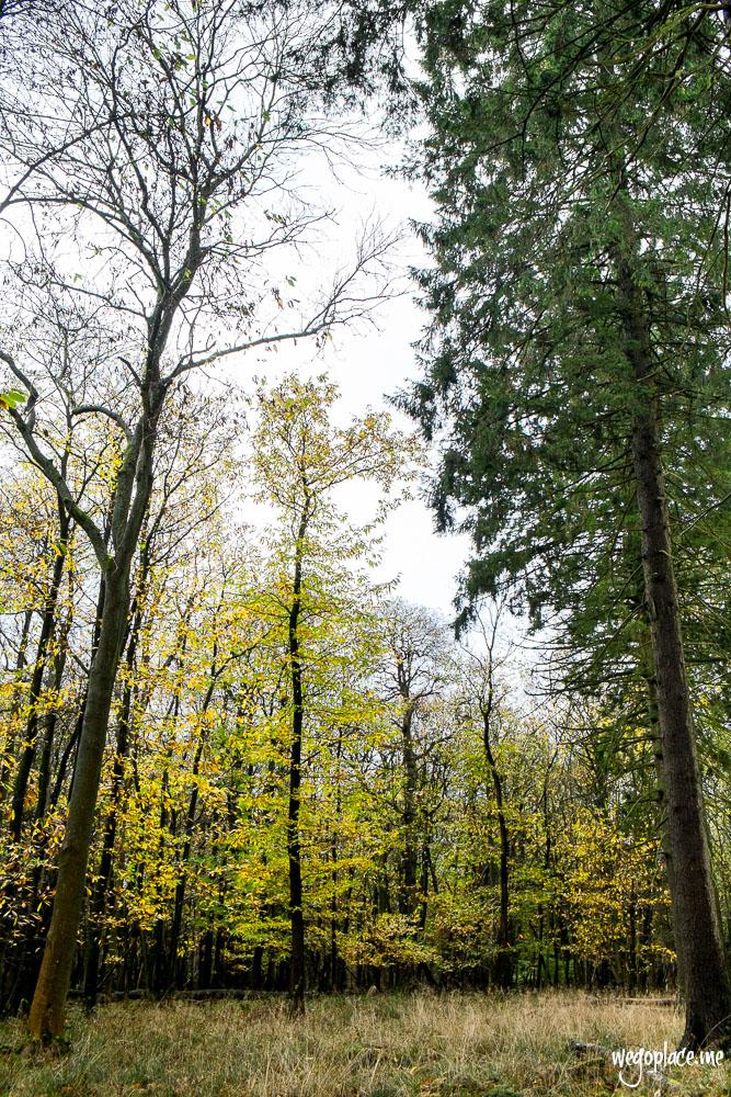 Autumn Trees at Ashridge Estate