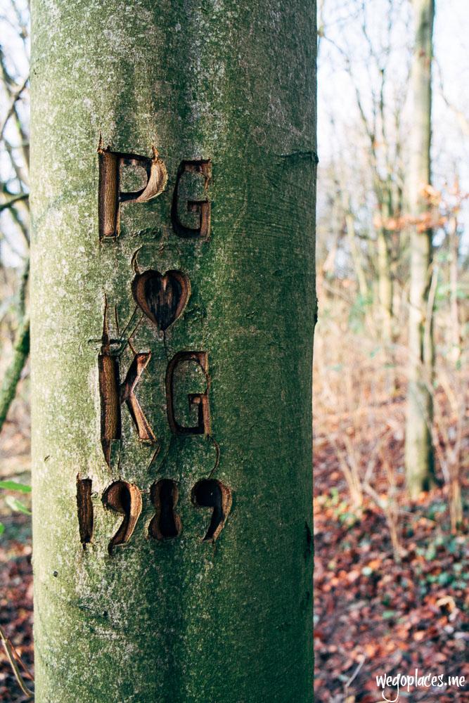 tree engraving in Dunstable