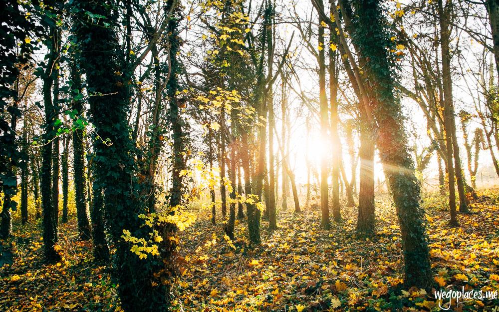 Autumn sunlight through the trees
