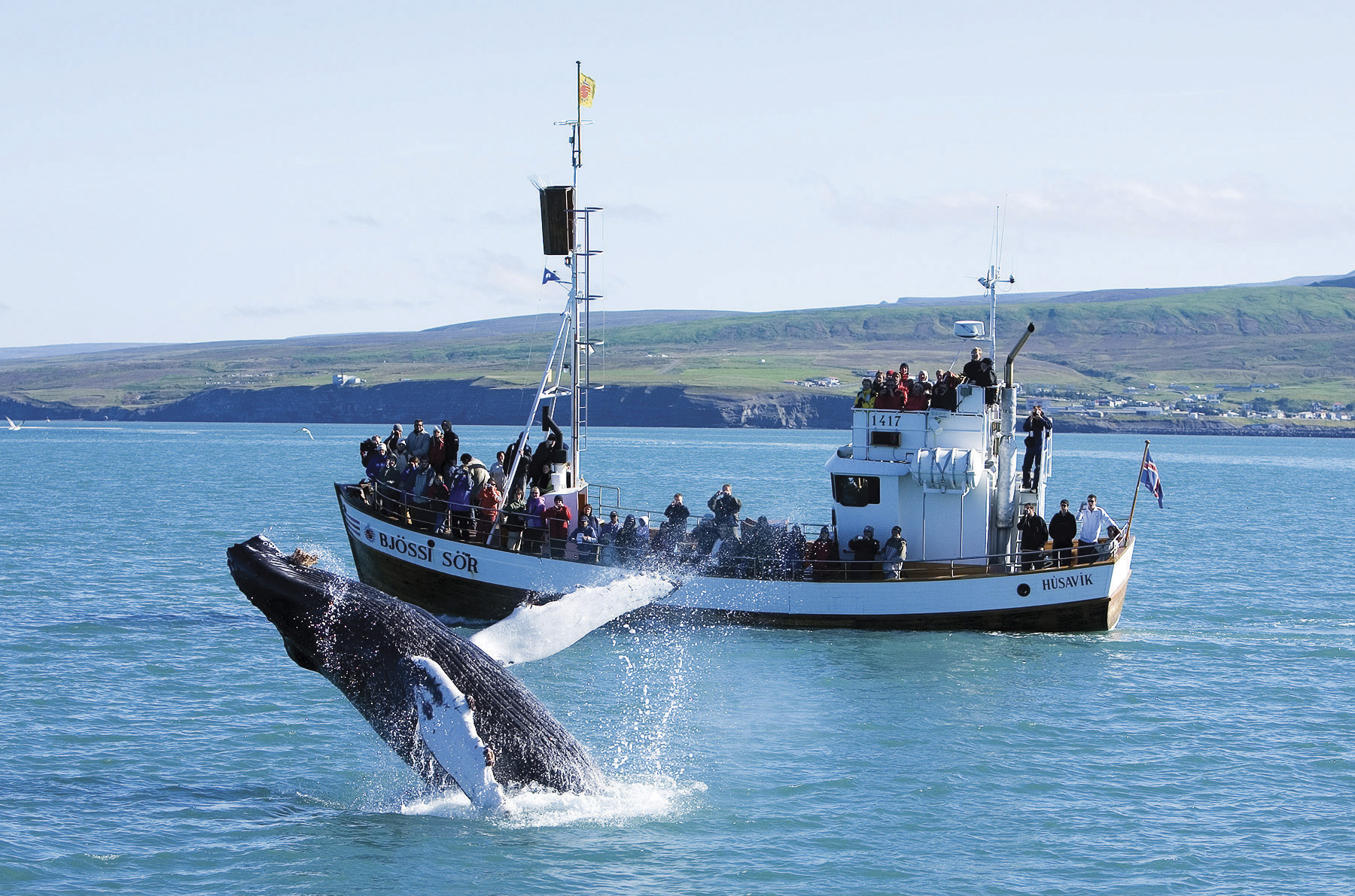 Whale watching in Husavik, Iceland