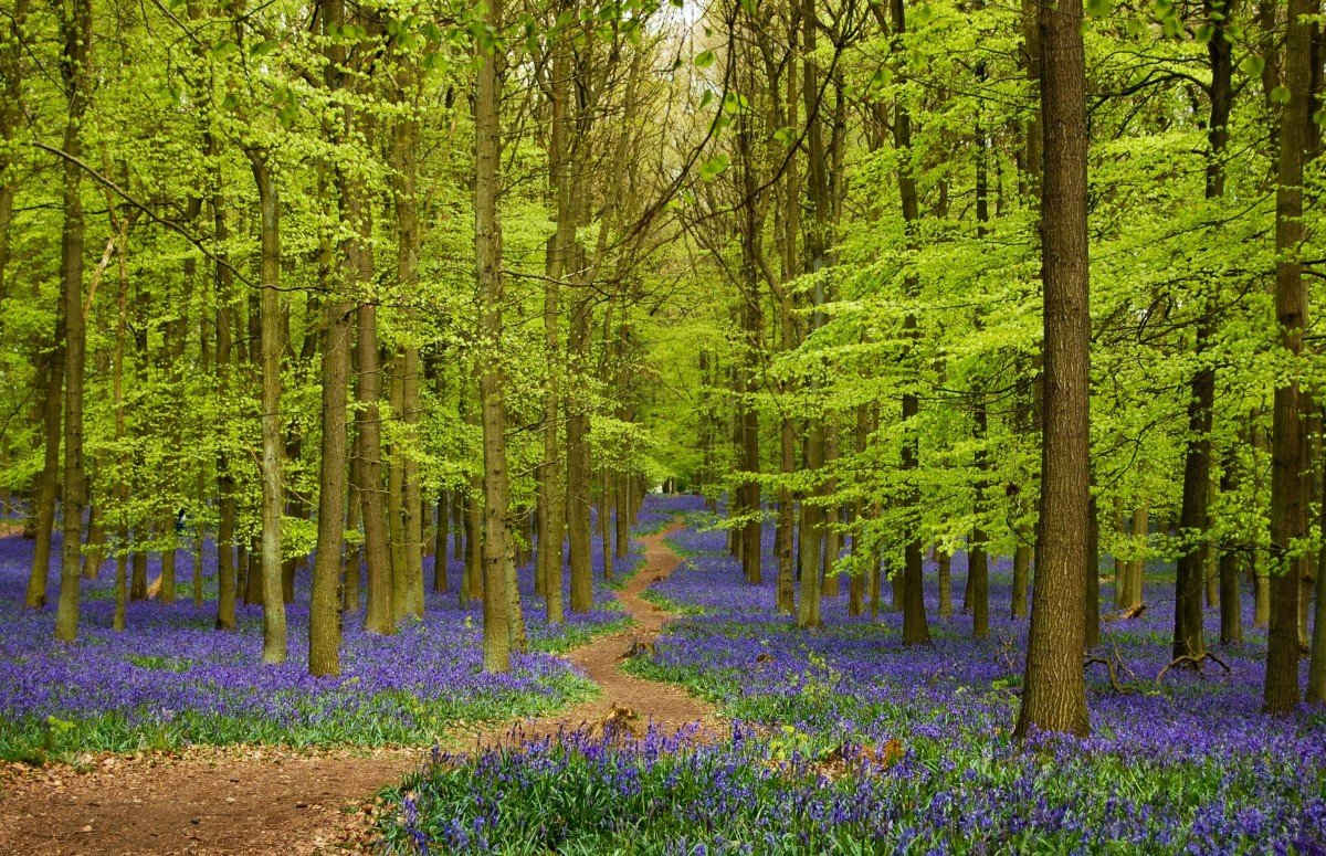 Best Walks Near London