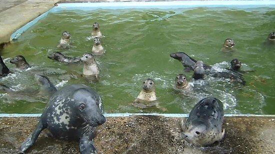 cornish seal sanctuary gweek cornwall