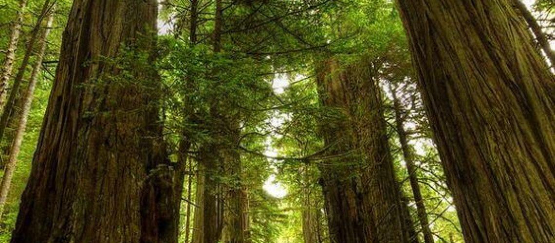 oylmpic national park rain forest